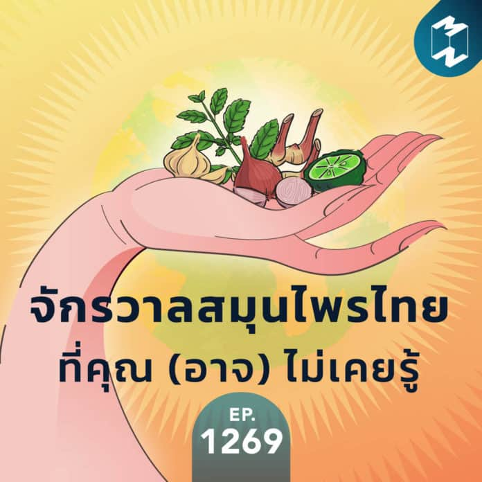 MM EP.1269 | จักรวาลสมุนไพรไทยที่คุณ (อาจ) ไม่เคยรู้